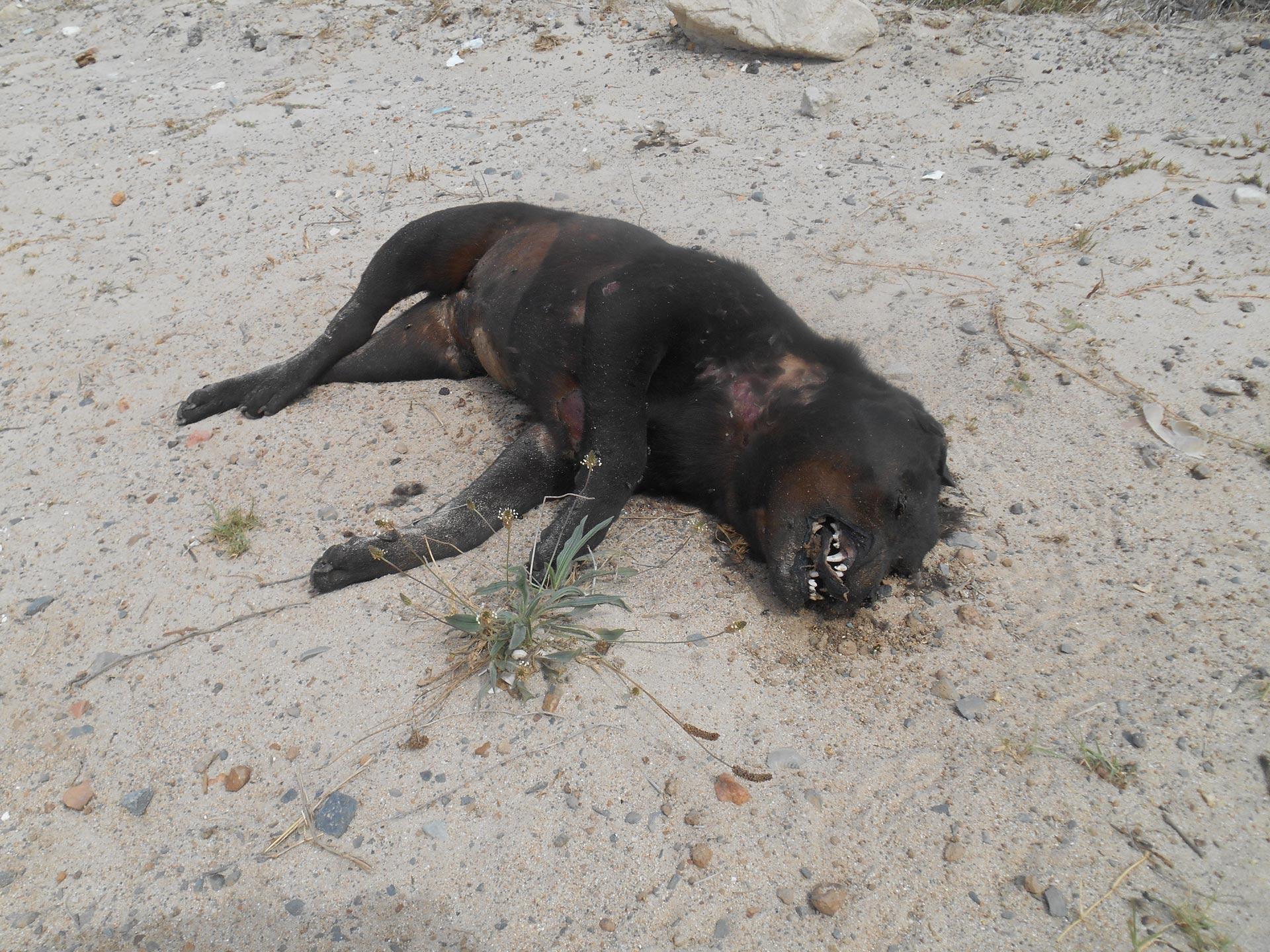 Hund schwarz - Südafrika